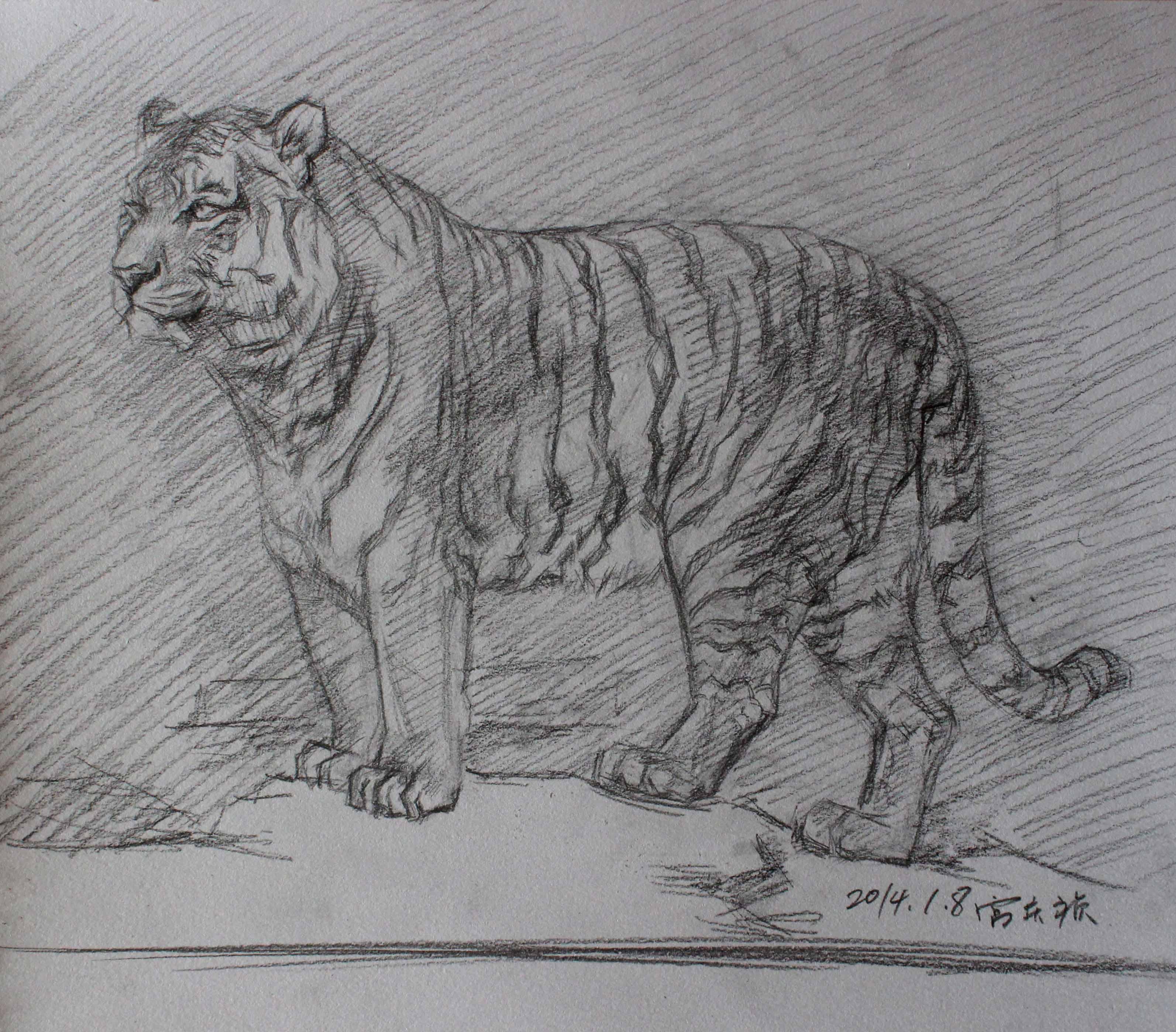 怎么画老虎头素描步骤